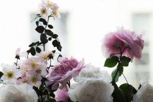 Bouquet de Rosa Antica Plasticae dit «jardin de Granville», 2017. artiste upcycling.