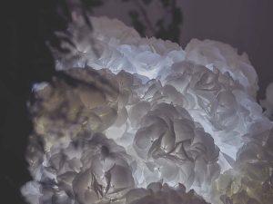 Marianne Guedin, scénographie végétale, septembre 2017, Nuage de fleurs pour Aquazzura, Paris