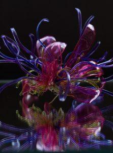 L'oeuvre, à la fois poétique et engagée, met en exergue la philosophie artistique, sociale et environnementale de William Amor. Fleur réalisée avec des bouteilles en plastique. artiste upcycling.