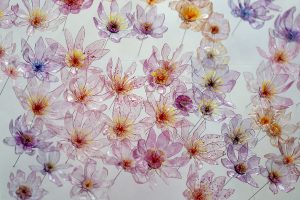 William Amor, upcycling artiste, installation florale artistique, Janvier 2020. Fleurs confectionnées à partir de bouteilles plastiques sculptées et légèrement teintées.